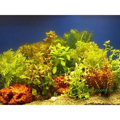 ... uk category aquatics aquarium plants plant care live aquarium plants