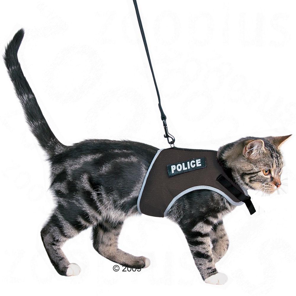 Как сделать поводок для кота