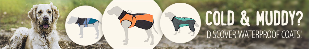 dog coats -