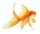 Conseils poissons