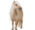 Horses magazine picture