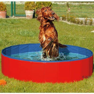 Piscina para perros for Piscina para perros madrid