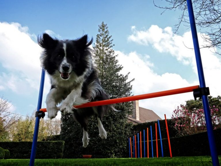Dog Agility, Dog Fun and Games