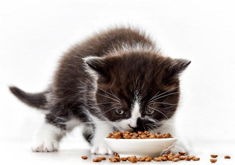 Feeding Kitten -Kitten Eating