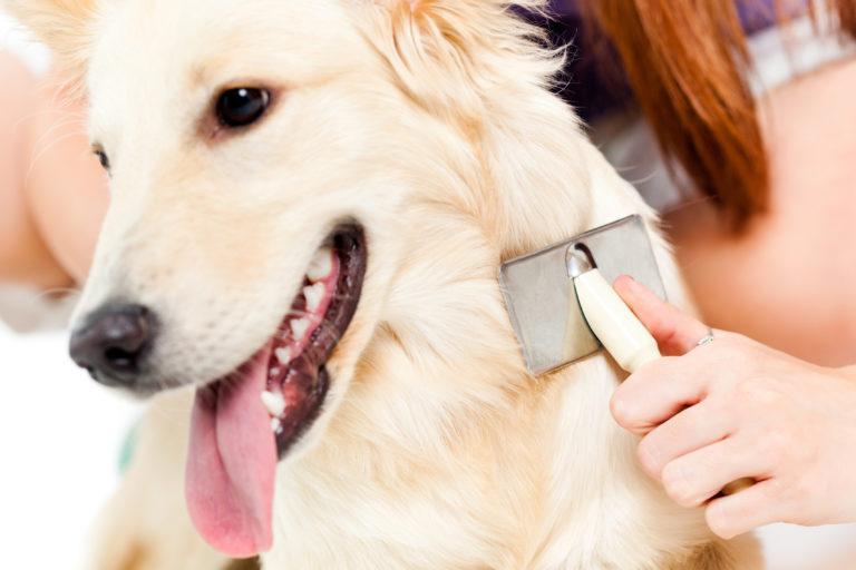 Dog Grooming - Dog Care - Dog Grooming