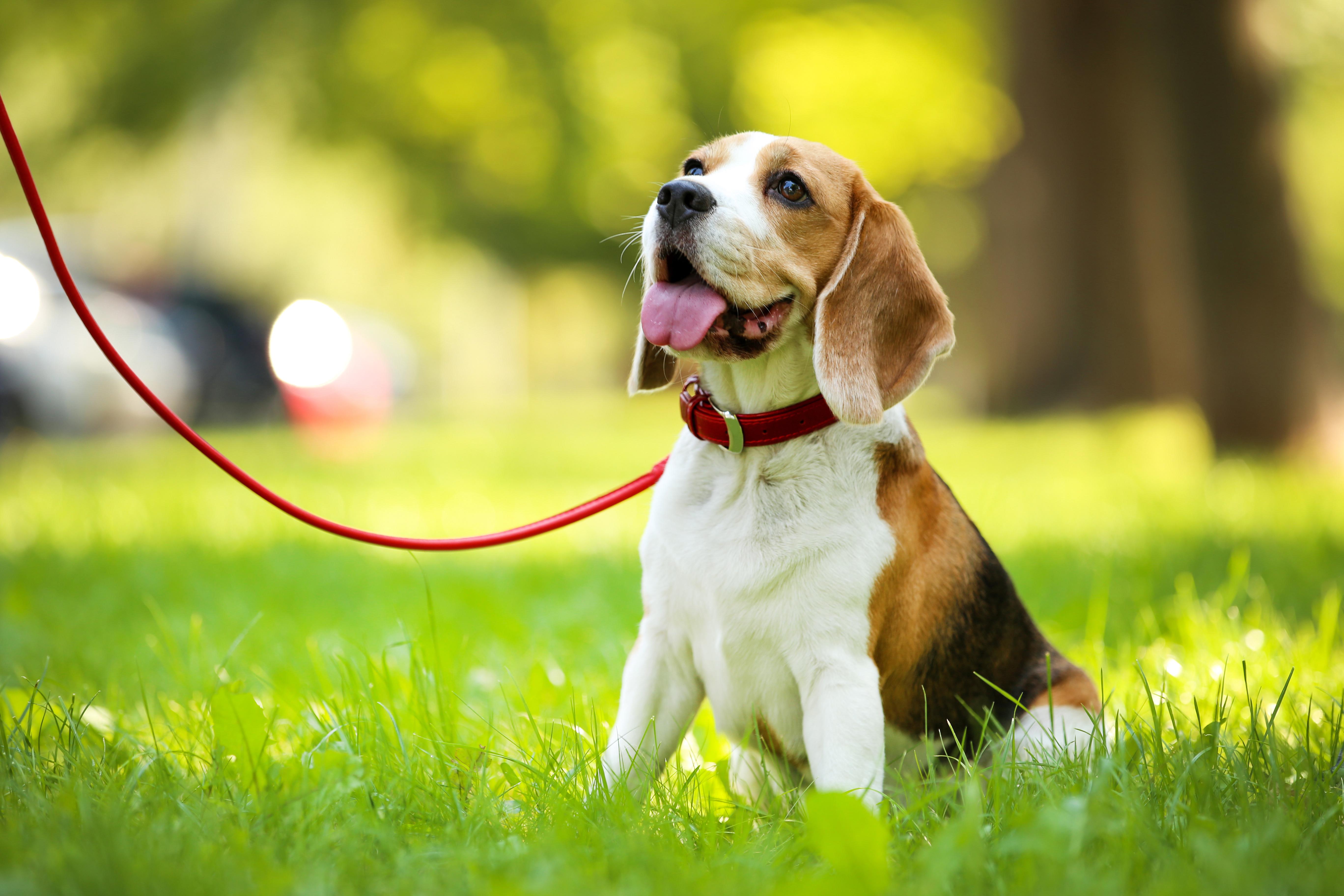 Female Dogs in Heat - zooplus Magazine