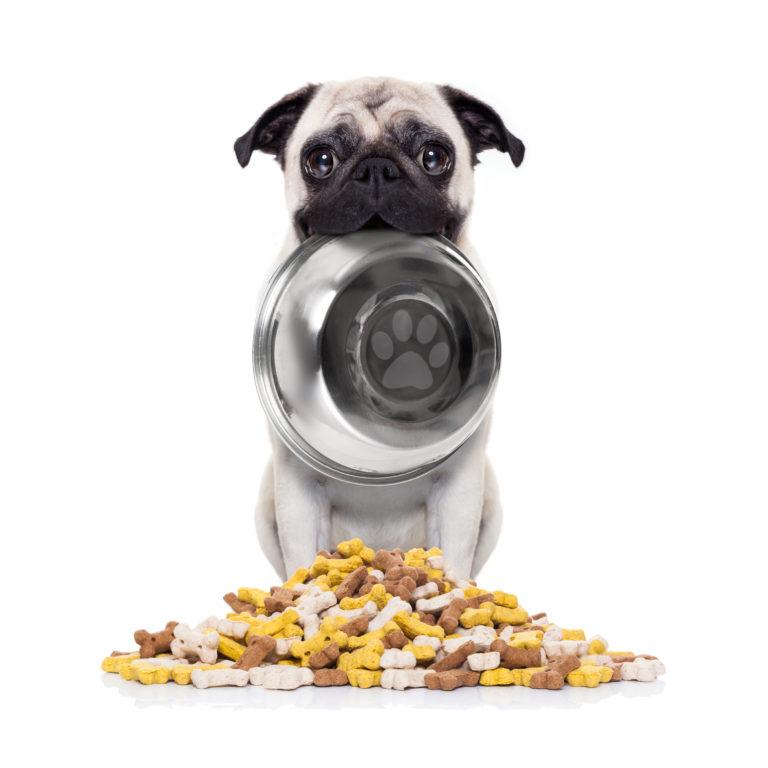 Pug Diet - Pug Food