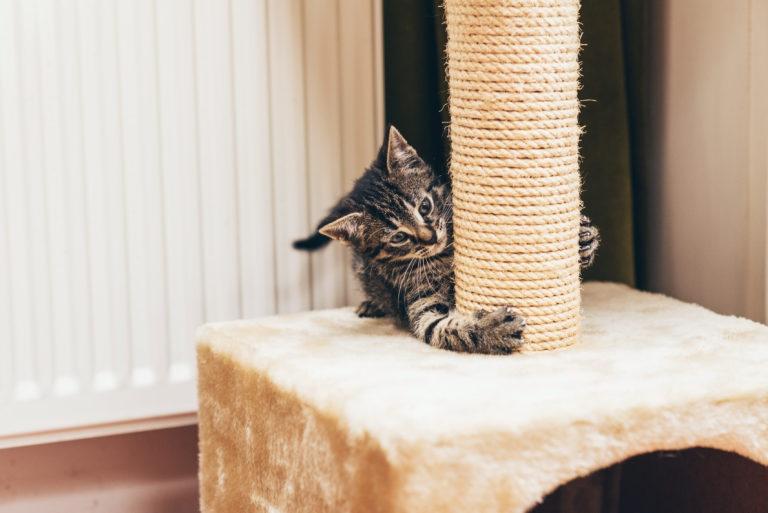 Cat Tree vs Scratching Post