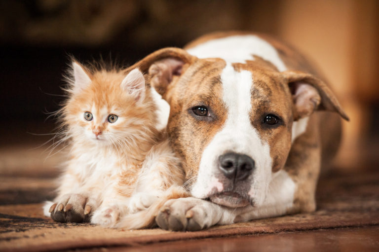 Cat and Dog Living together