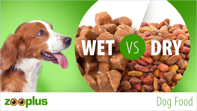 Dog Dry Food Versus Wet Food