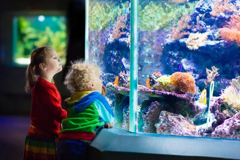 Knock on Aquarium