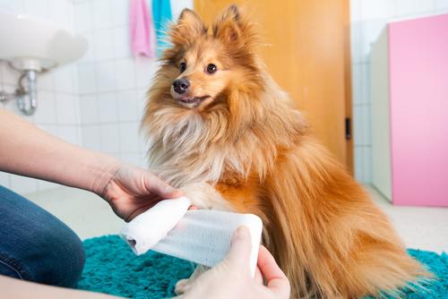 Dog Health Care First Aid