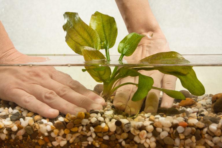 Aquarium Plants starter guide