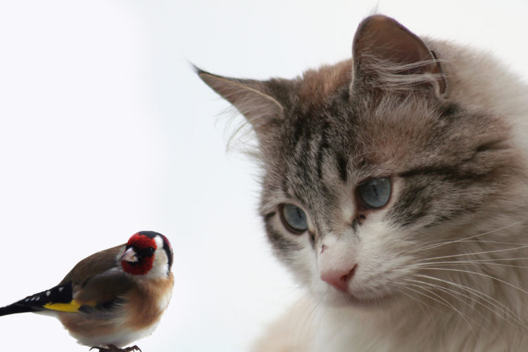 cat and bird cohabitation - living together
