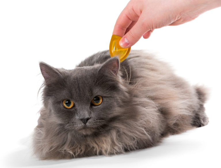 Protect Cats from Ticks & Fleas