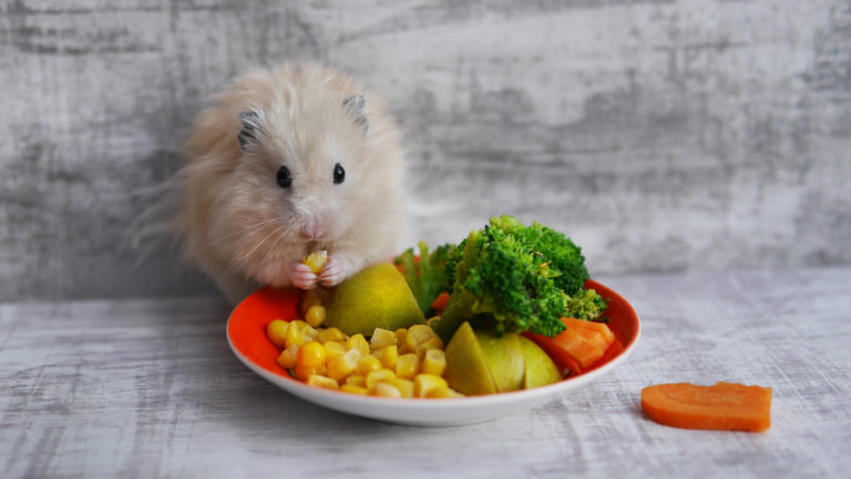 green food for rodents