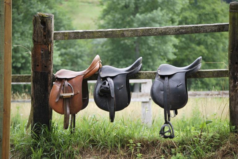 Saddle Care and Bridle Care - Horse