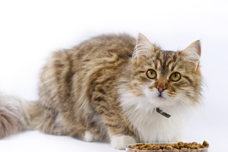 food for cats with diabetes