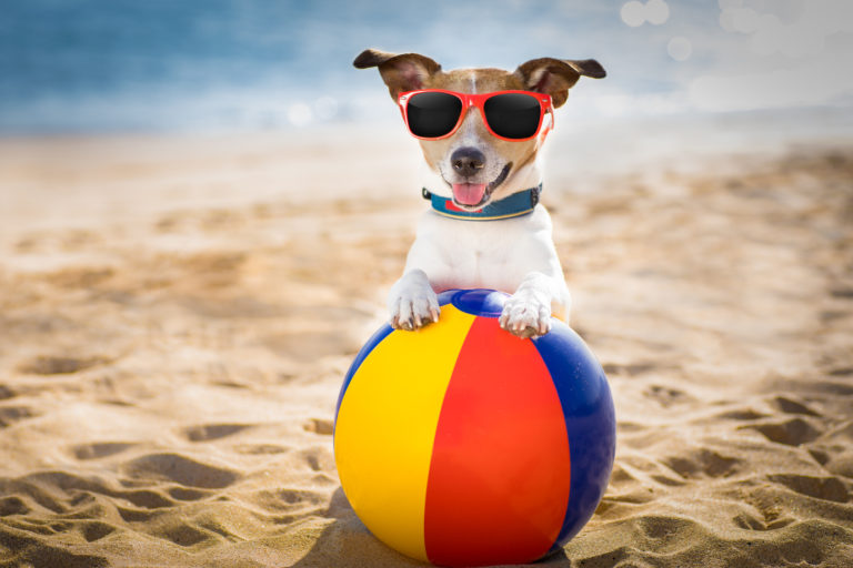 summer accessories and toys for dogs