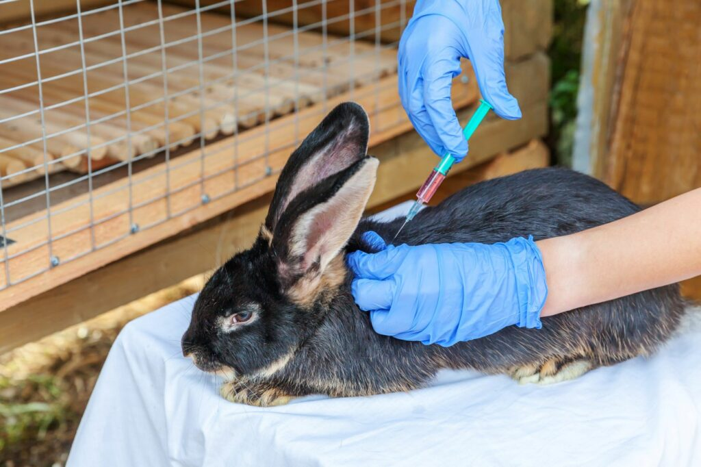 Rabbit getting vaccinated