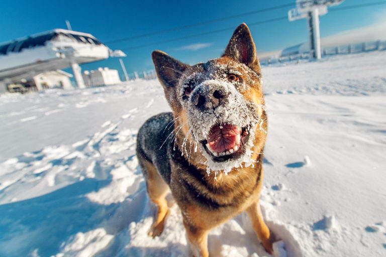 dog care in winter