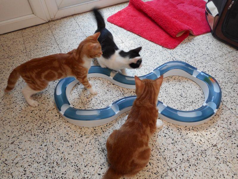 catit senses indoor cat game UK