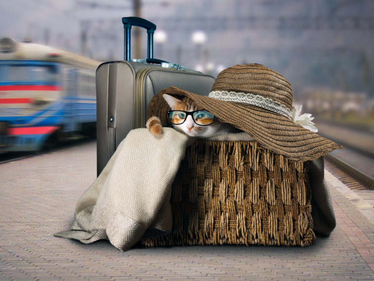 Train travel with cat