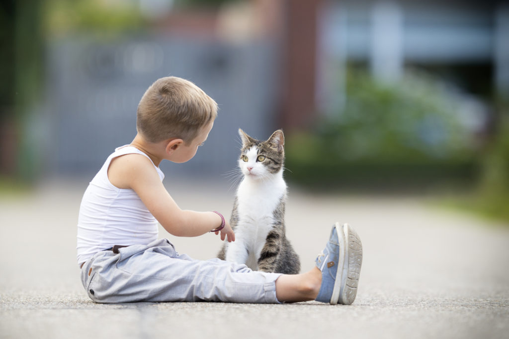 cat playing with child