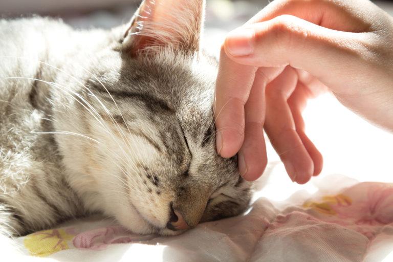 purring kitten
