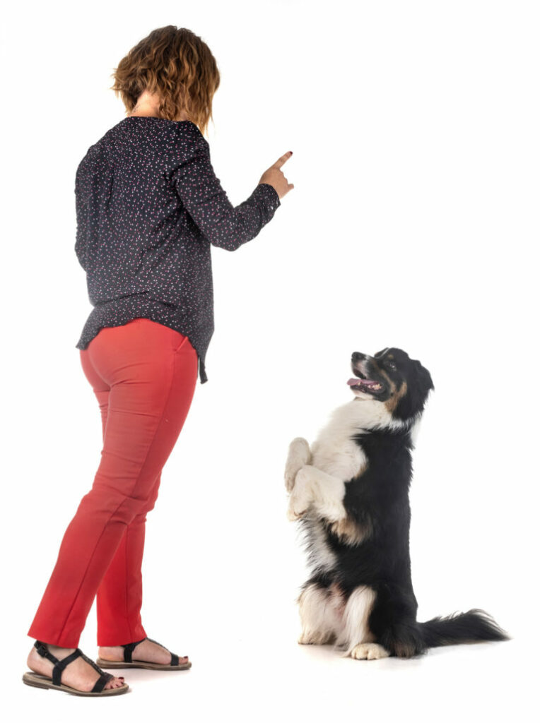 Woman training dog obedience