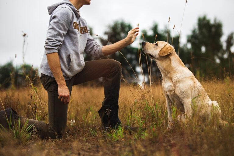 anti hunt training dog