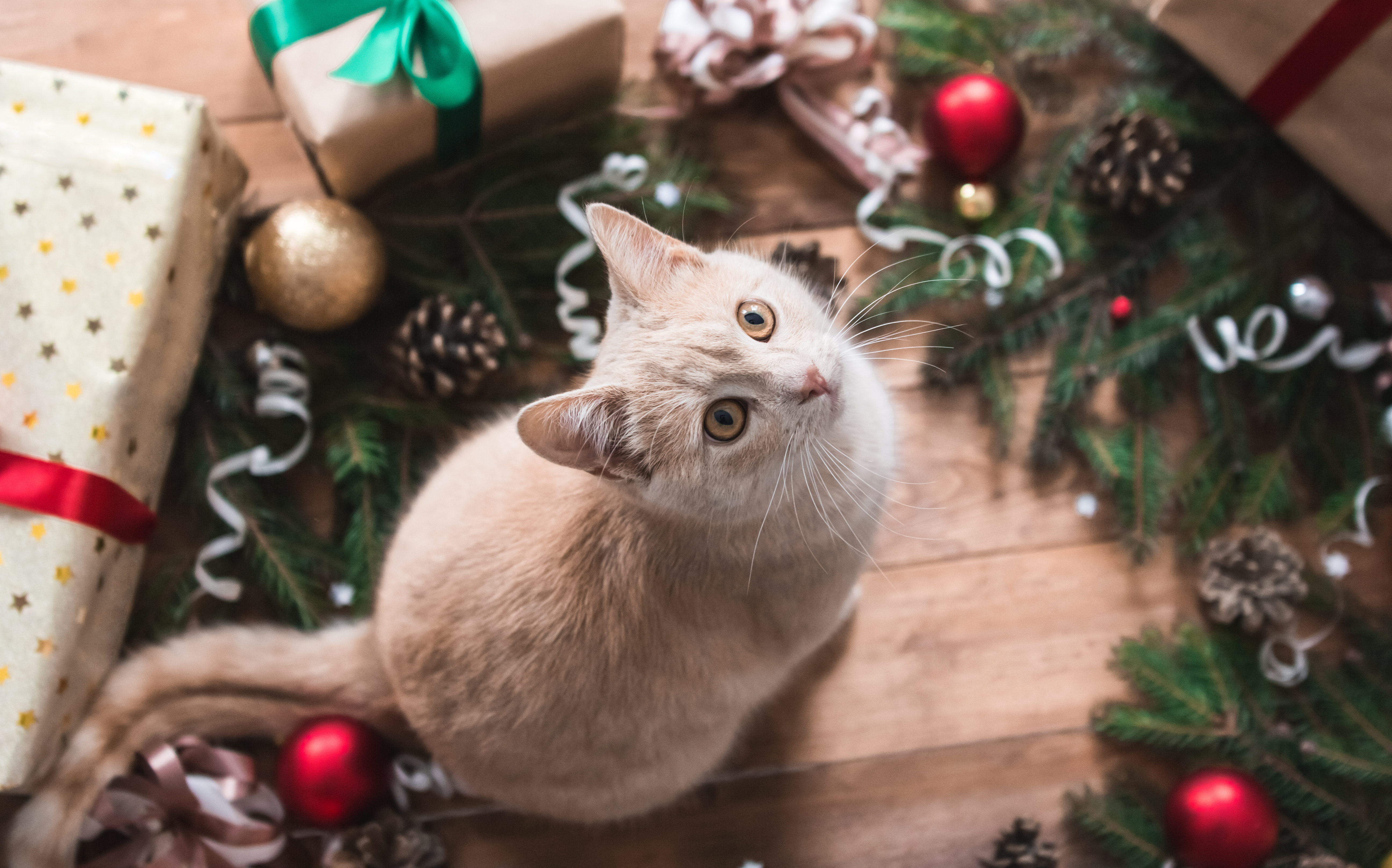 Cat under christmas tree - cat as a christmas gift