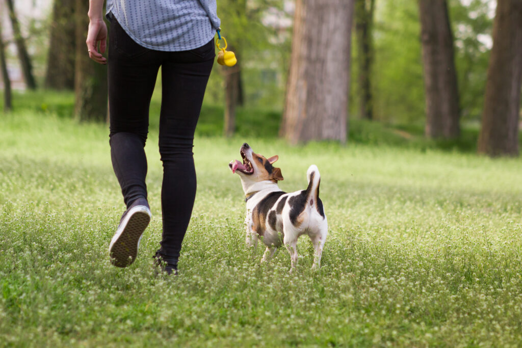 Young woman walking with a dog playing training