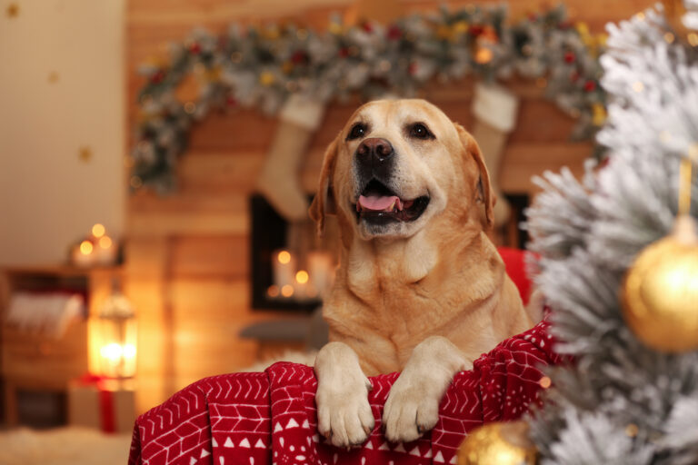 Golden Retriever christmas gift