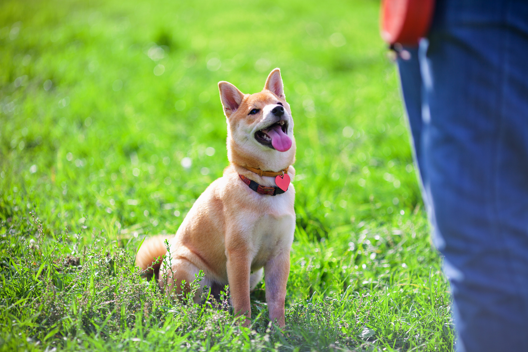 Obedience Training for Dogs | zooplus Magazine