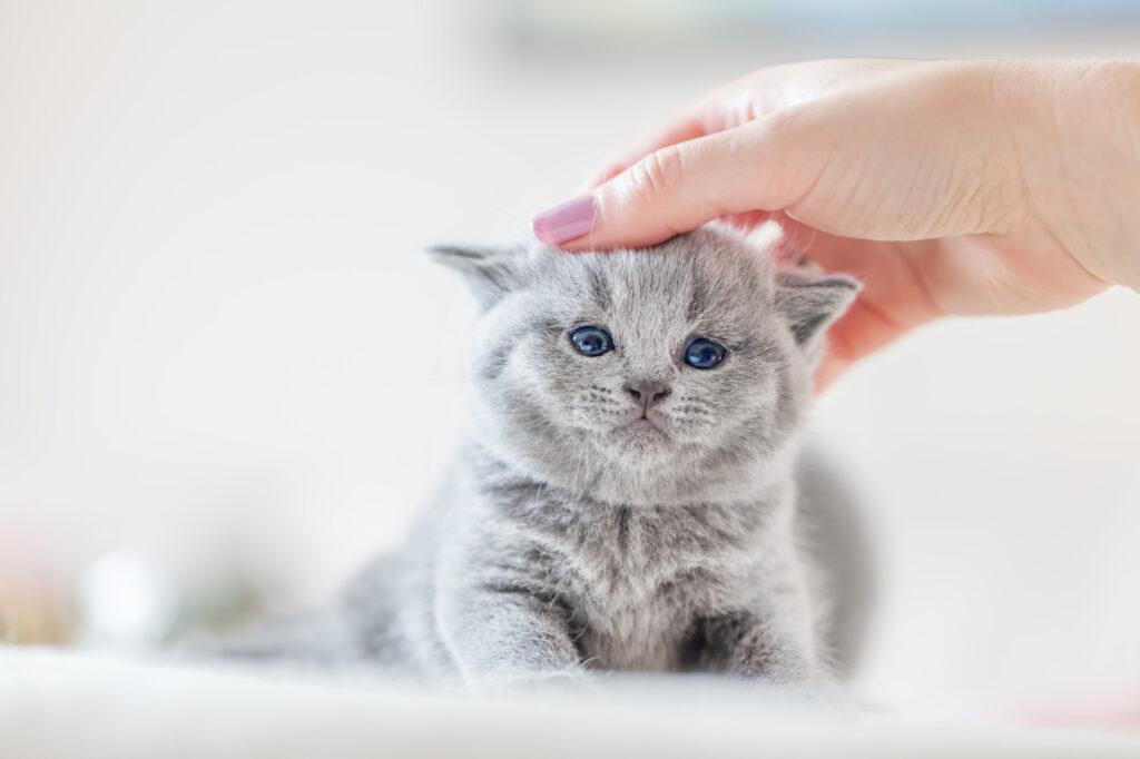 Vermifuge kitten