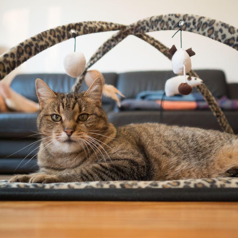 cat toy frame