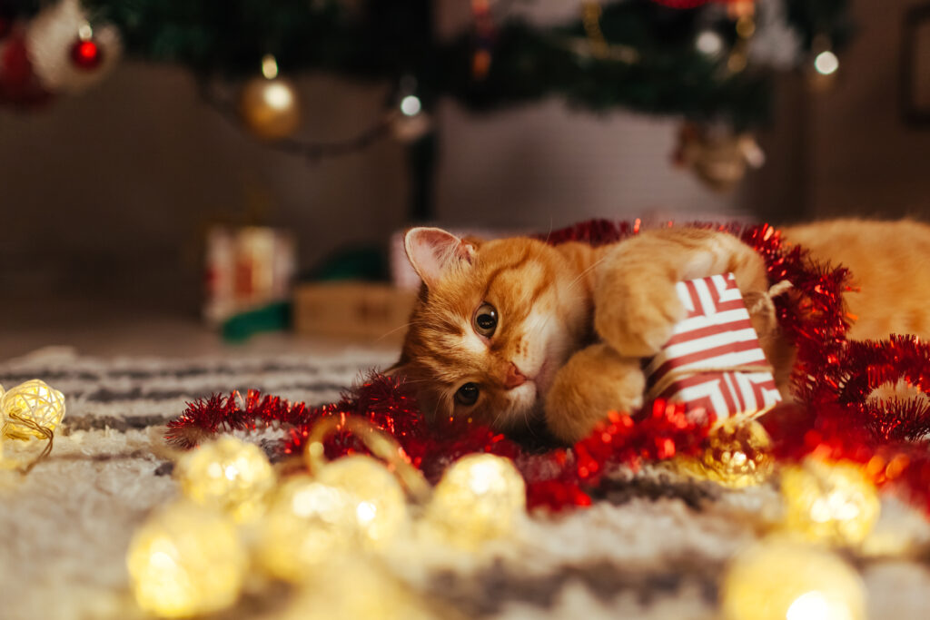 Ginger cat playing with christmas presents