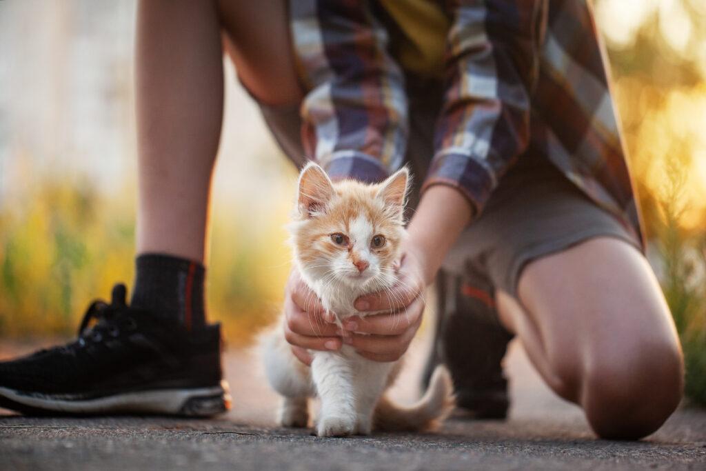 lost ginger kitten