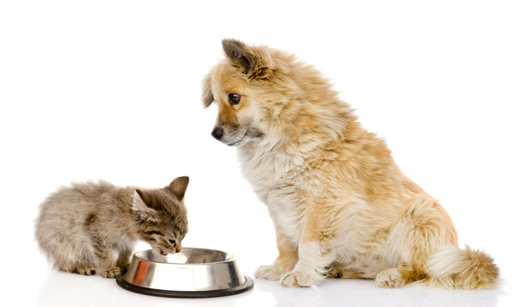 Is it safe to feed cat food to my dog?