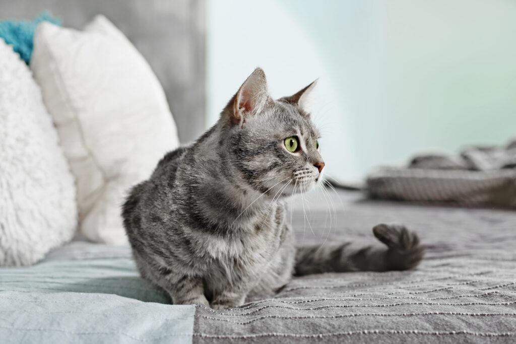 Kitten wets bed