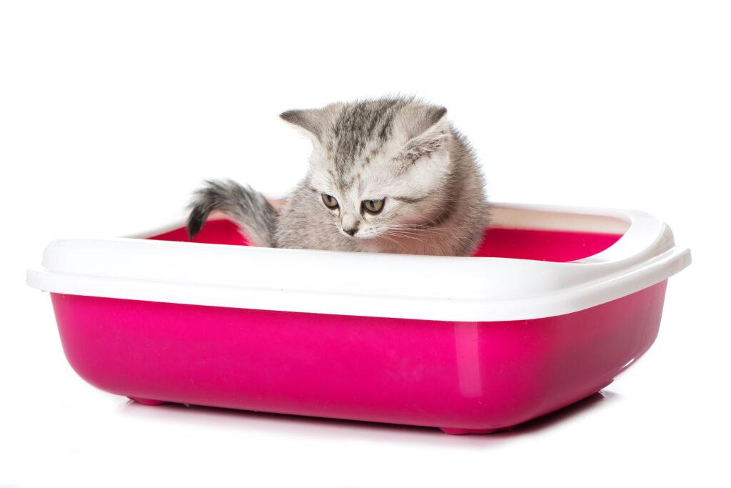 Kitten diarrhoea