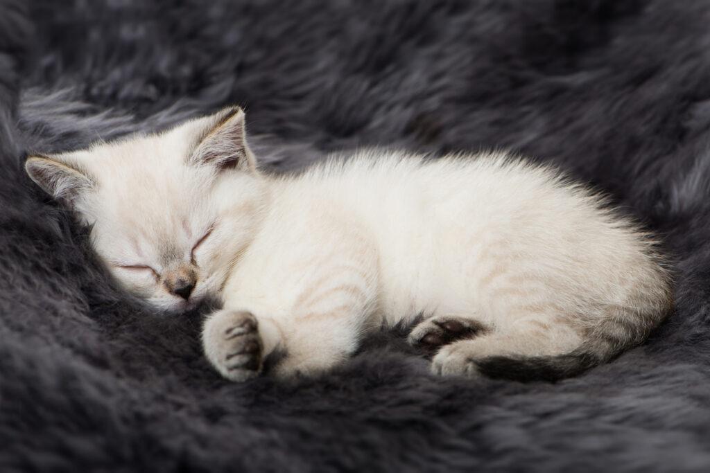 sleeping kitten - diarrhea symptoms