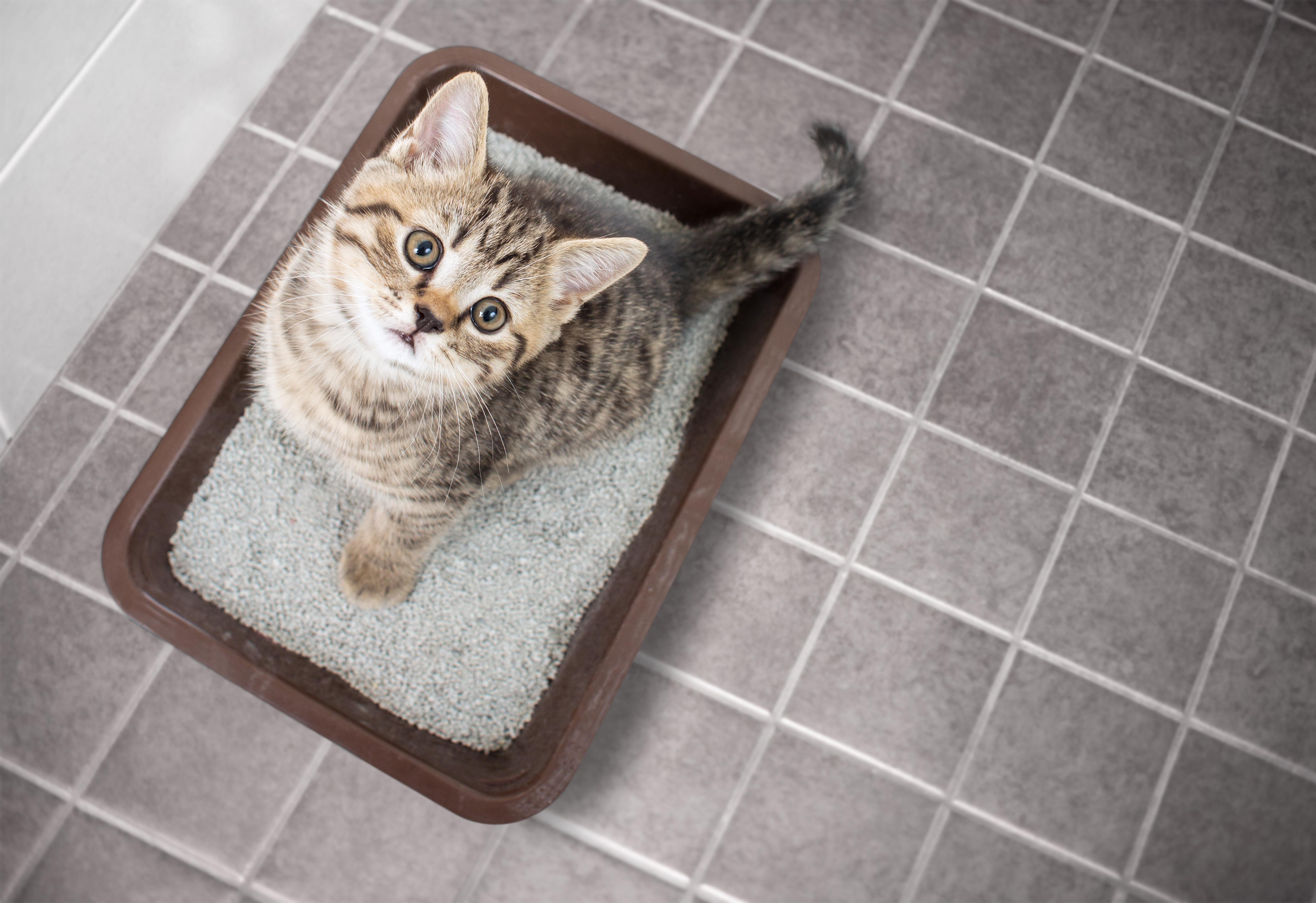 Kitten Diarrhoea Zooplus Magazine