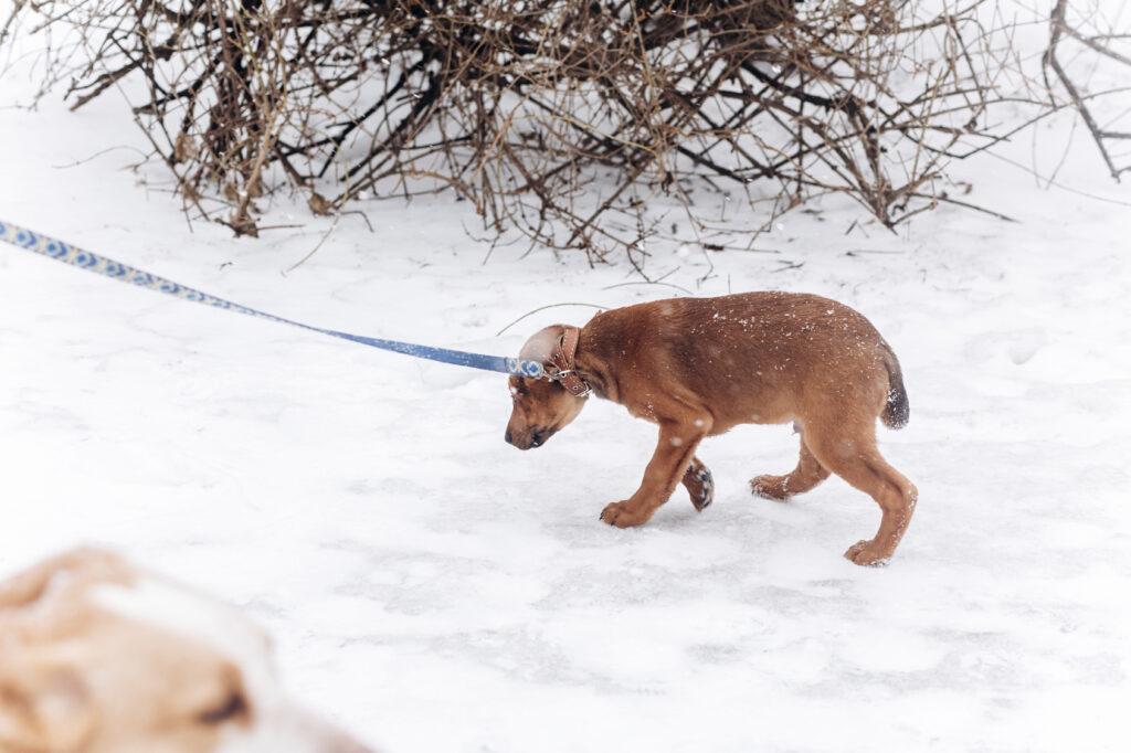 scared dog snow