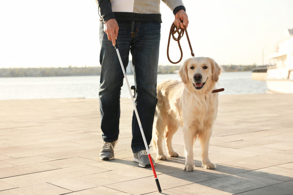 guide dog with blind person