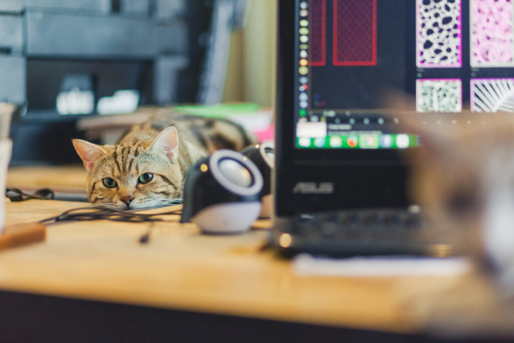 how to do home office with a cat
