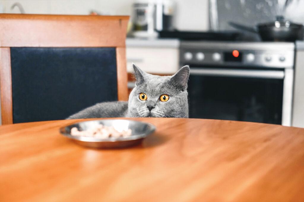 change of cat diet