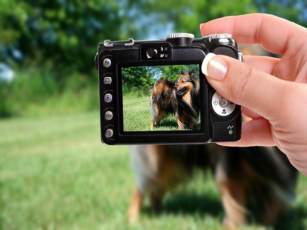 dog photo on digital camera