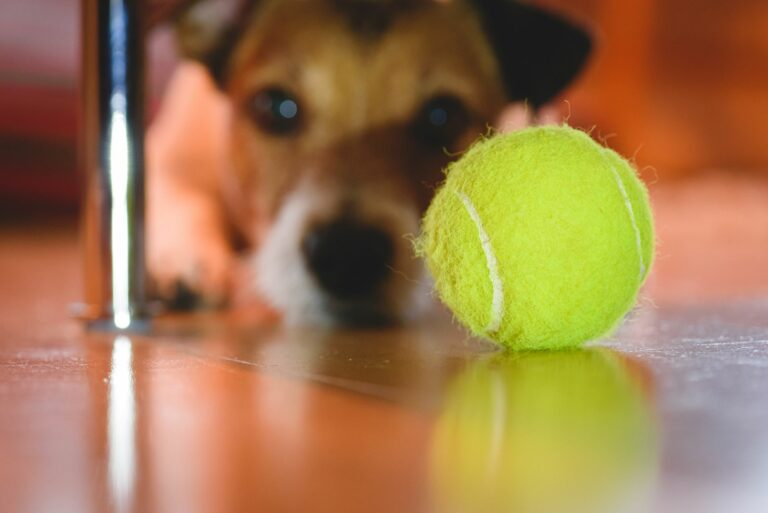 tennisball dangerous for dogs
